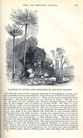 THE ANNALS OF HORTICULTURE;