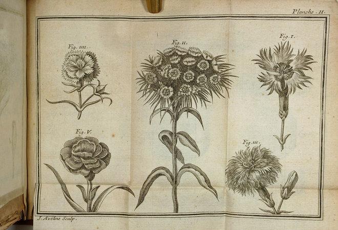 NOUVEAU TRAITÉ DES OEILLETS. by (Carnations) (Anonymous) M., L. C. B.