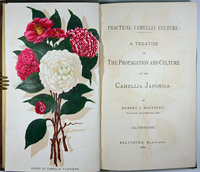 PRACTICAL CAMELLIA CULTURE: by HALLIDAY, Robert J.