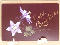 COLO. BEAUTIES (cover title). by (Pressed Flower Album) (Anonymous)