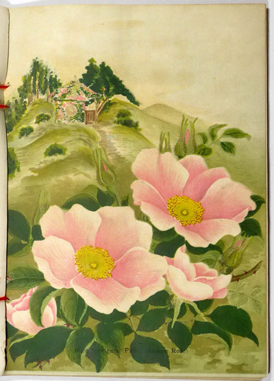 BULBS, PLANTS, SEEDS. DESCRIPTIVE CATALOGUE  1909-10 (cover title). by (Nursery catalogue, Yokohama) YOKOHAMA NURSERY CO., Ltd.