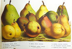 Another image of NOS POIRES by (Color plates - Pears) (HOUTTE, Louis Van, Établissement HORTICOLE.).