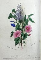 FLORE DES DAMES, OU NOUVEAU LANGAGE DES FLEURS, by ( Language of Flowers) HOSTEIN, H(ippolyte).