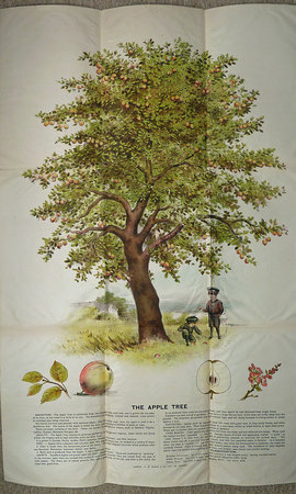 BACON'S PICTURES OF TREES. by (Educational Posters -Trees) Bacon, G.W. , publsher.