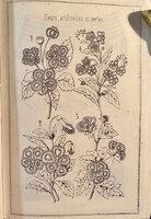 LE LIVRE DES FLEURS EN PAPIER. by ROUGET DE L'ISLE, Mme.(Claude Joseph).