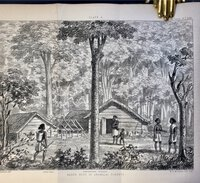 THE FORESTS AND GARDENS OF SOUTH INDIA. by (India) Cleghorn, Hugh