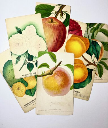 SEVEN COLORED AMERICAN NURSERYMEN'S PLATES by (Botanical Illlustration); (Nursery Trade)